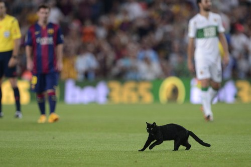 black cat Barcelona Elche