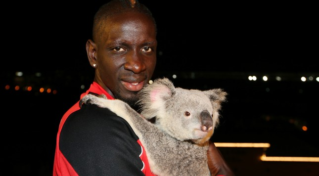 BRISBANE, AUSTRALIA - JULY 16:  Liverpool FC player Mamadou Sakho cuddles Australia Zoo koala India at Gambaro Hotel on July 16, 2015 in Brisbane, Australia. Liverpool FC are in Queensland to play the Brisbane Roar at Suncorp Stadium on the first leg of their Australian tour  (Photo by Chris Hyde/Getty Images for Tourism Queensland)