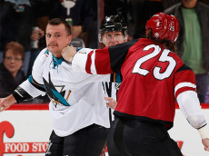 GLENDALE, AZ - NOVEMBER 19:  Micheal Haley #38 of the San Jose Sharks fights with Ryan White #25 of the Arizona Coyotes during the first period of the NHL game at Gila River Arena on November 19, 2016 in Glendale, Arizona.  (Photo by Christian Petersen/Getty Images)