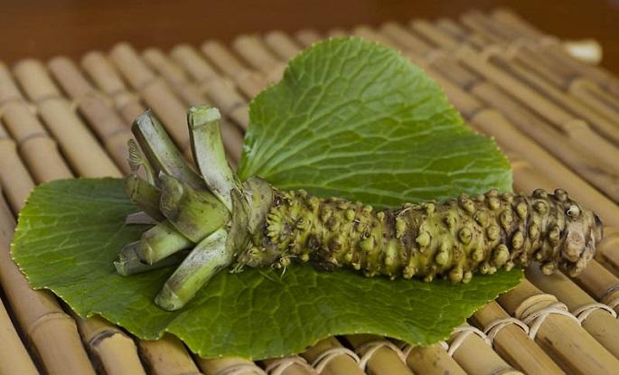 wasabi_plant