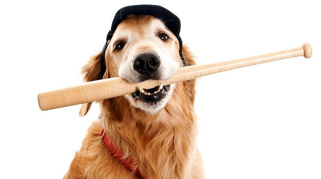 dog_baseball