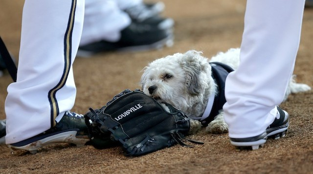Milwaukee Brewers' new spring training mascot Hank chews on a glove as he attends a meeting of pitchers during Brewers spring training baseball practice, Thursday, Feb. 20, 2014, in Phoenix. (AP Photo/Ross D. Franklin) ORG XMIT: RFOTK208