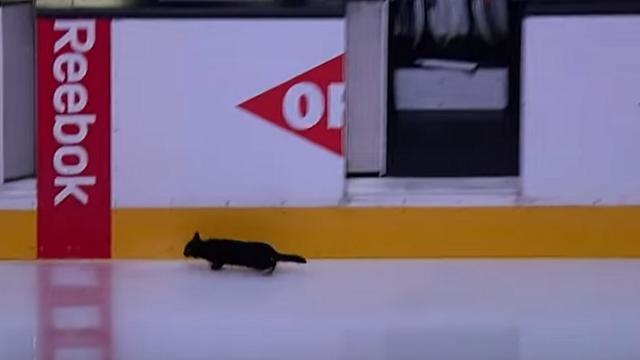 Blackcatsharkscropped