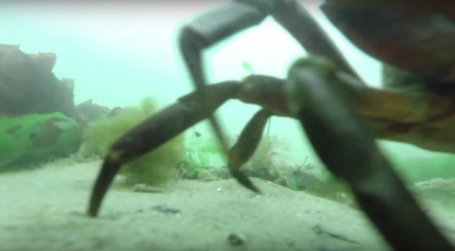 GoPro footage survives a year on the ocean floor