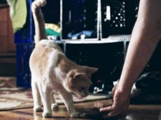 cat_stone