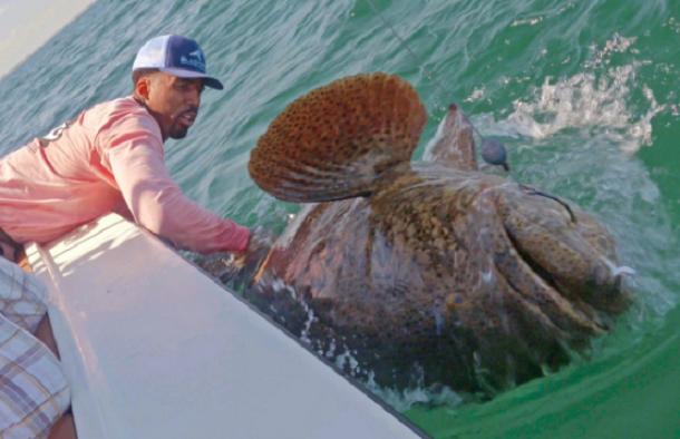 Wilson-chandler-goliath-grouper