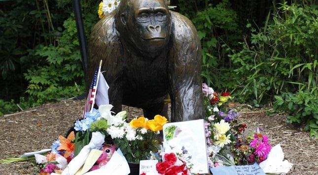 A baby gorilla named Harambe McHarambeface ... nope, not likely