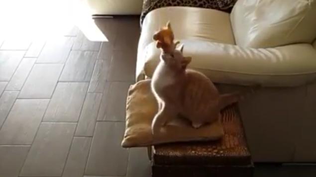 foolishcat