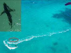 great white shark kite surfer 3