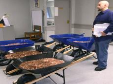 pennies lots of em