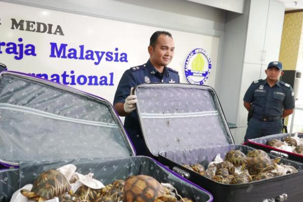 Customs officers seize tortoises