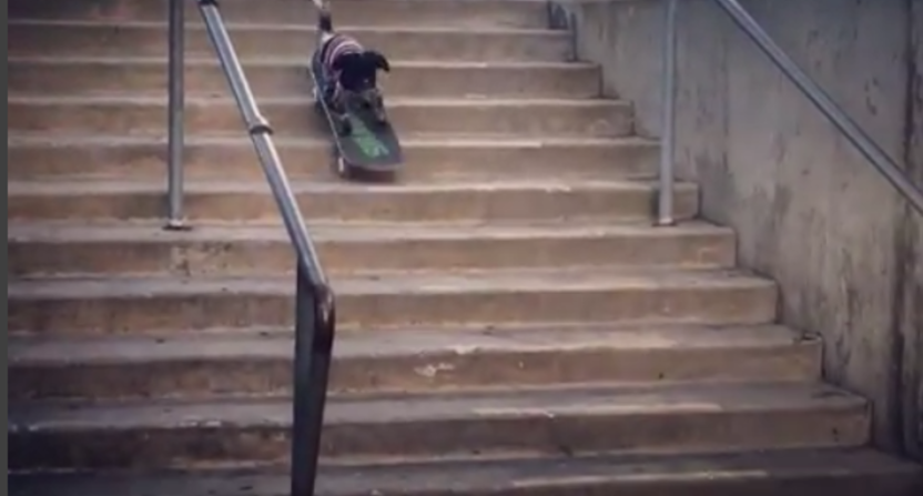Murdy the dog takes on stairs.