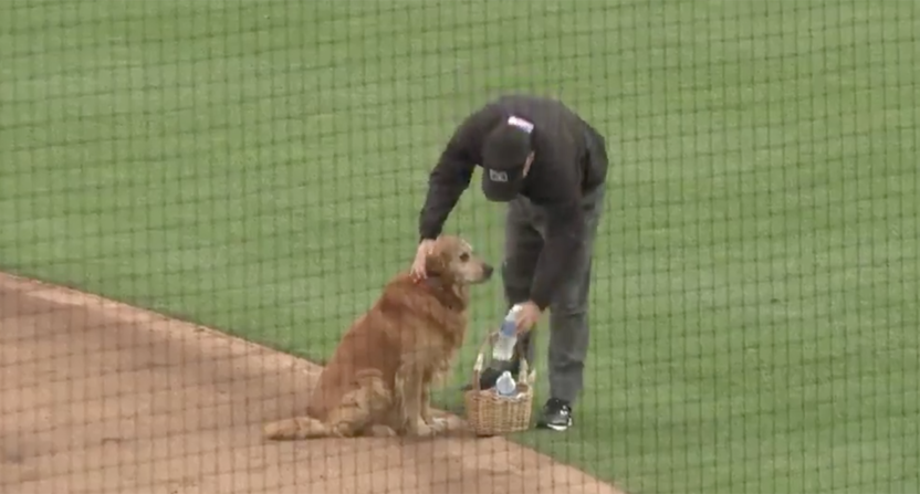 Jake the Diamond Dog delivers water to baseball umpires