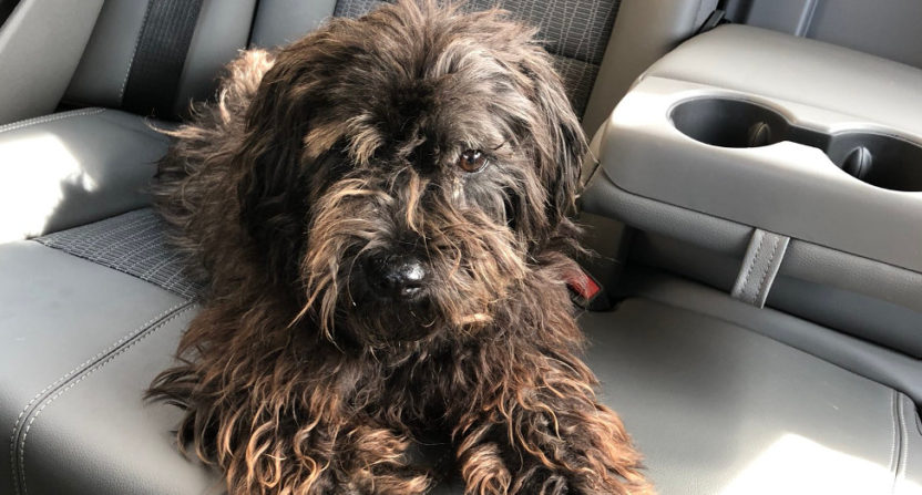 ESPN's Dave McMenamin rescued this dog Tuesday.