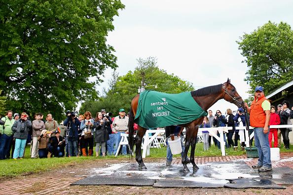 Kentucky Derby horse Nyquist