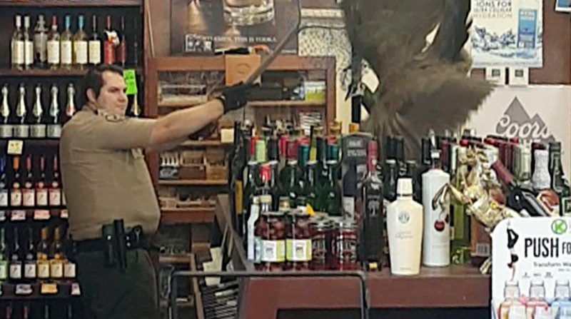 Peacock in liquor store