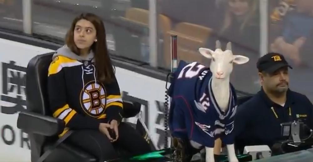 Boston Bruins Put A Plastic Goat In A Tom Brady Jersey On