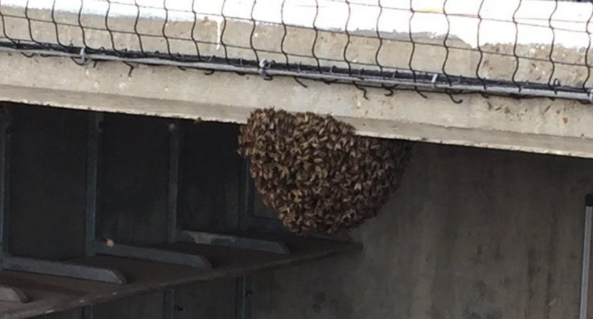 A swarm of bees delayed a Double-A game in Corpus Christi, Texas.