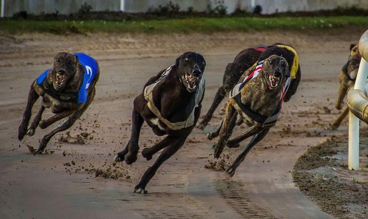 The History of Greyhound Racing
