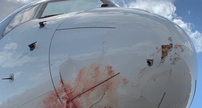The Utah Jazz plane after a collision with a flock of birds.