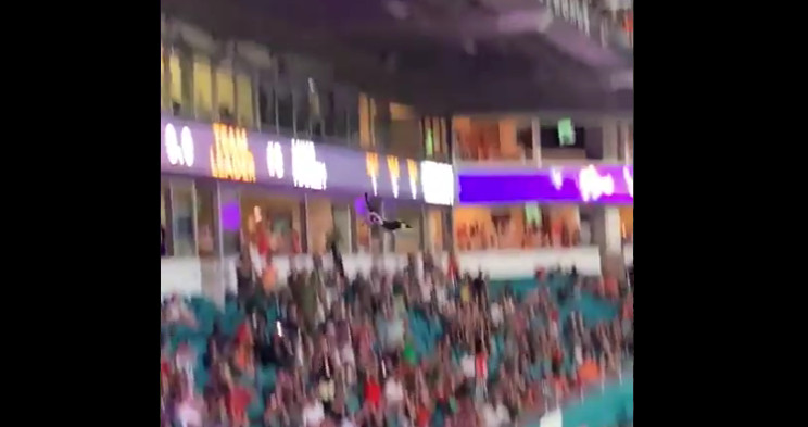 The falling cat in Miami.