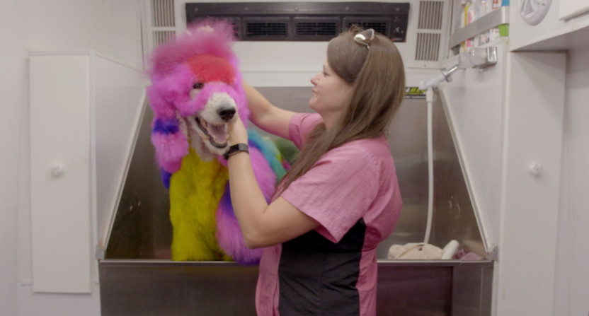 Well Groomed, a documentary on competitive dog grooming, is coming to HBO in December.