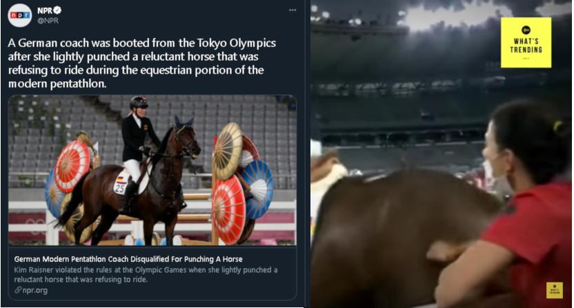 """A NPR tweet on Kim Raisner """"lightly punching"""" a horse."""